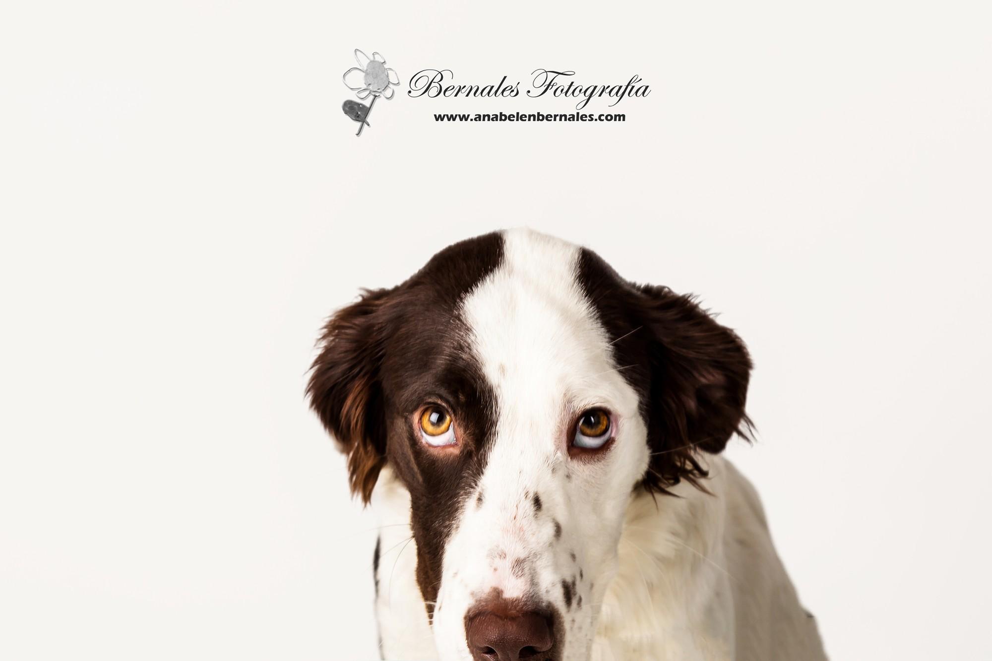 Bernales20160222-mascotas4Bernales