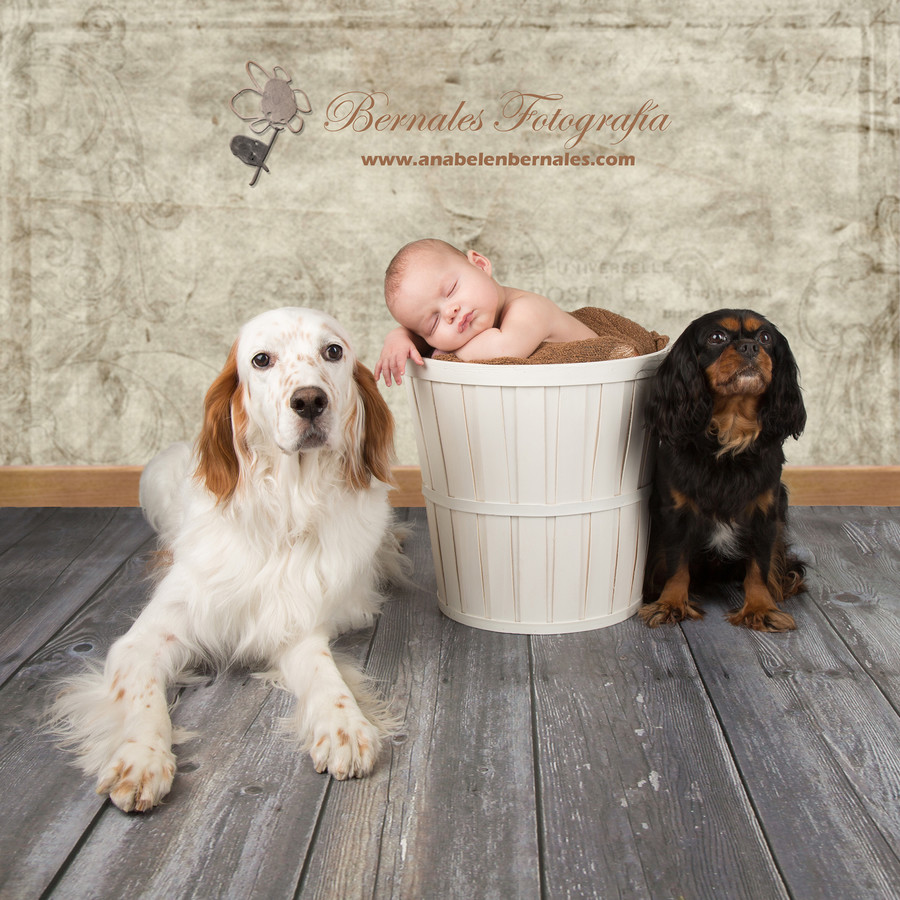bernales, fotografia, basauri, mascotas, bodas, bebes, mascotas, 1delosnuestros
